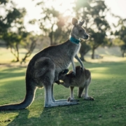 澳洲大学申诉